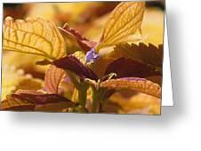 Autumn Coleus Greeting Card