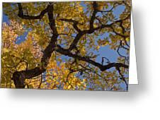 autumn Garry Oak Quercus garryana Klickitat County WA USA Greeting Card