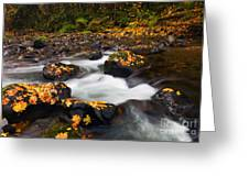 Autumn Passing Greeting Card