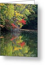 Autumn Tree Reflections Greeting Card