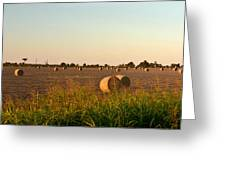 Bales In Peanut Field 2 Greeting Card by Douglas Barnett
