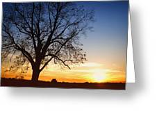 Bare Tree At Sunset Greeting Card