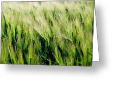 Barley, Co Down Greeting Card