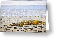Beach Detail On Pacific Ocean Coast Greeting Card by Elena Elisseeva