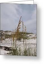 Beach Sand Dunes Greeting Card