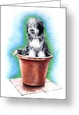 Beardie In A Pot Greeting Card