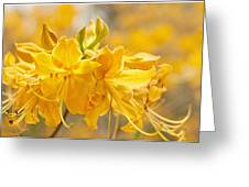 Beautiful Blossom Greeting Card