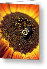 Bee And Sunflower Greeting Card