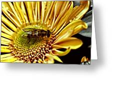 Bee Greeting Card by Kelly Rader