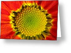 Bee's View Greeting Card