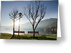 Bench And Trees Greeting Card
