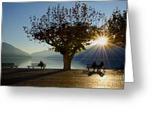 Benches And Trees Greeting Card