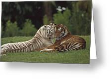 Bengal Tiger Panthera Tigris Tigris Greeting Card by Konrad Wothe