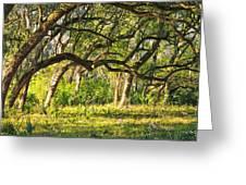 Bent Trees Greeting Card