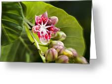 Berry Blossom Greeting Card