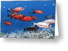 Bigeye Fish Greeting Card