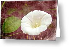 Bindweed - The Wild Perennial Morning Glory Greeting Card