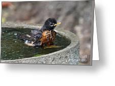 Bird Bath Fun Time Greeting Card