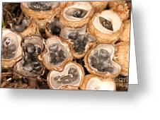 Birds Nest Fungus Greeting Card