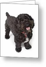 Black Bichon-cocker Spaniel Dog Greeting Card