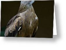 Black Kite 1 Greeting Card
