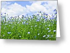 Blooming Flax Field Greeting Card by Elena Elisseeva