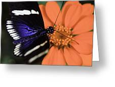 Blue And White Longwing Greeting Card