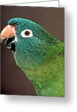 Blue Crowned Conure Greeting Card