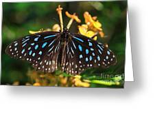 Blue Glassy Tiger Butterfly Greeting Card