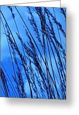 Blue Grass  Greeting Card