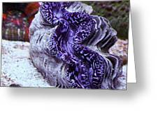 Blue Metallic Maxima Clam Greeting Card by Erik Hovind