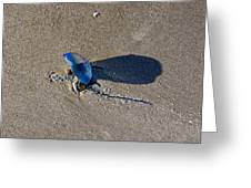 Blue On The Beach Greeting Card