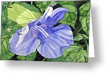 Blue Sky Vine Greeting Card