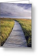 Boardwalk Along The Salt Marsh Greeting Card