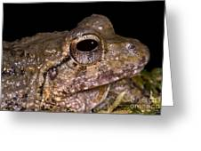 Bobs Robber Frog Greeting Card