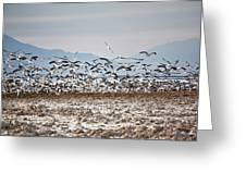 Bombay Beach Birds Greeting Card