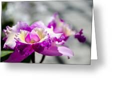 Botanical Gardens Greeting Card