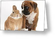 Boxer Puppy And Netherland-cross Rabbit Greeting Card