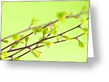 Branches With Green Spring Leaves Greeting Card by Elena Elisseeva