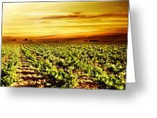 Bright Sunset At Vineyard Greeting Card