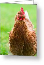 Brown Hen On A Lawn Greeting Card