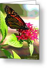 Butterfly Flowers Greeting Card