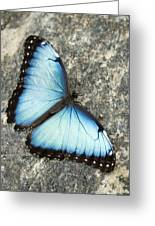 Butterfly, Niagara Botanical Gardens Greeting Card