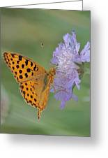 Butterfly On Right Position Greeting Card