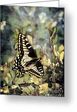 Butterfly On Yellow Flowers Greeting Card