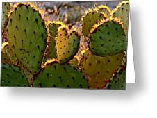Cactus Heart In Sunset Greeting Card