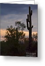 Cactus Vantage Greeting Card