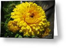 Calendula Named Bon-bon Yellow Greeting Card