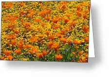 California Poppies And Goldfields Dance Greeting Card