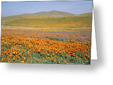California Poppies Fill A Landscape Greeting Card